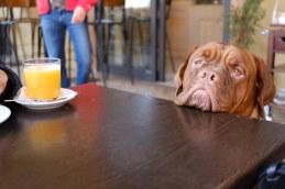 Bologna dog at cafe