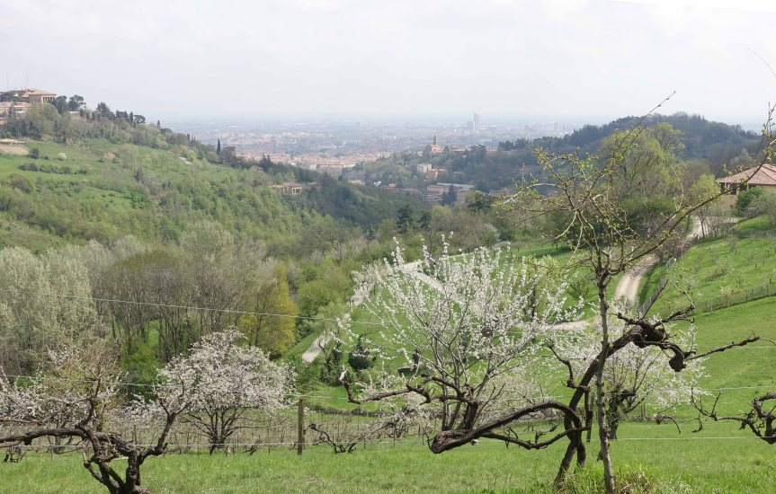 A Walk in Bologna's Hills