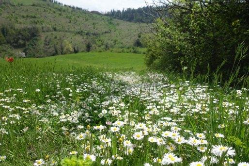 bologna hills 3