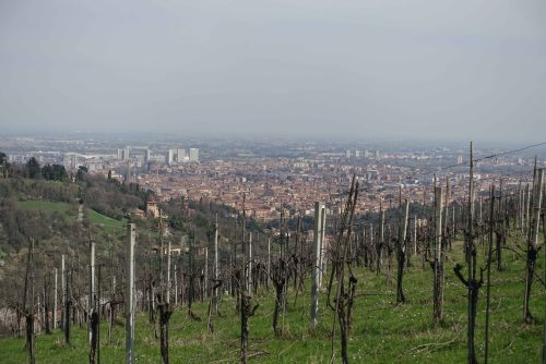 Bologna colli vineyard