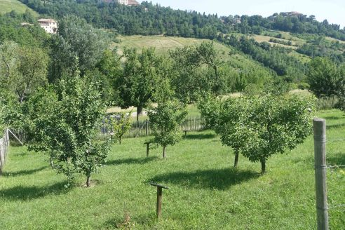 Villa ghigi fruit treesBologna