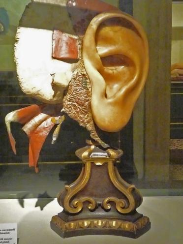 poggi morandi ear