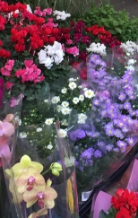 montagnola market flowers